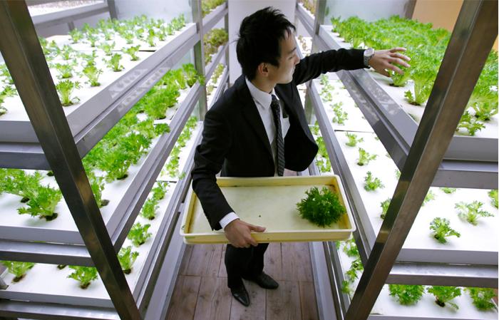 Ένα γραφείο – λαχανόκηπος!