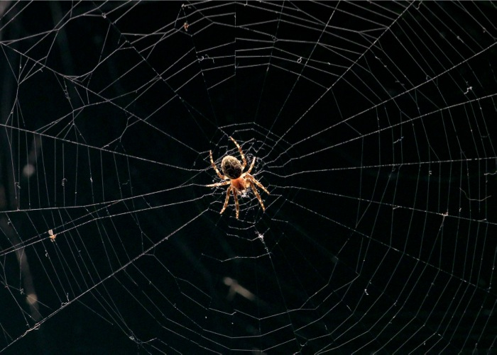 Στον ιστό της αράχνης