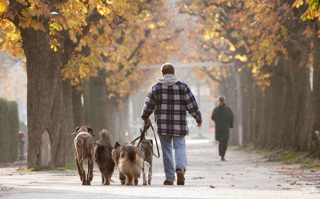 Οι σκύλοι θα ενημερώνουν πλέον τους ιδιοκτήτες τους για την κατάσταση της υγείας τους