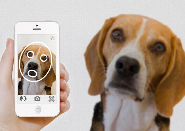 Το app που βρίσκει το χαμένο σας κατοικίδιο