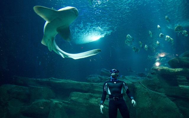 Οι καλύτερες υποβρύχιες φωτογραφίες