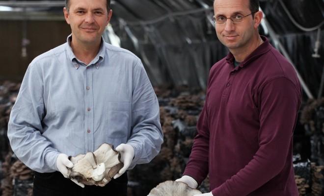 Δίρφυς: Η εταιρεία που έκανε τους Έλληνες να αγαπήσουν τα μανιτάρια