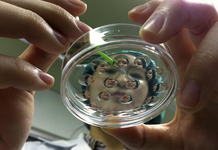 Επιστήμονες στις ΗΠΑ επανέφεραν στην ζωή εγκεφάλους χοίρων τέσσερις ώρες μετά το θάνατο τους