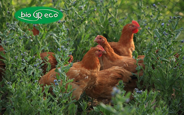 H Biogreco και το μέλλον της βιολογικής κτηνοτροφίας
