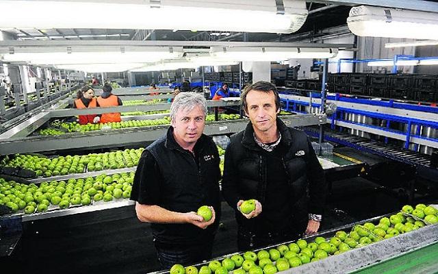 Αχλάδια από τα χέρια της οικογένειας Καλαφάτη τρώνε οι Αυστραλοί