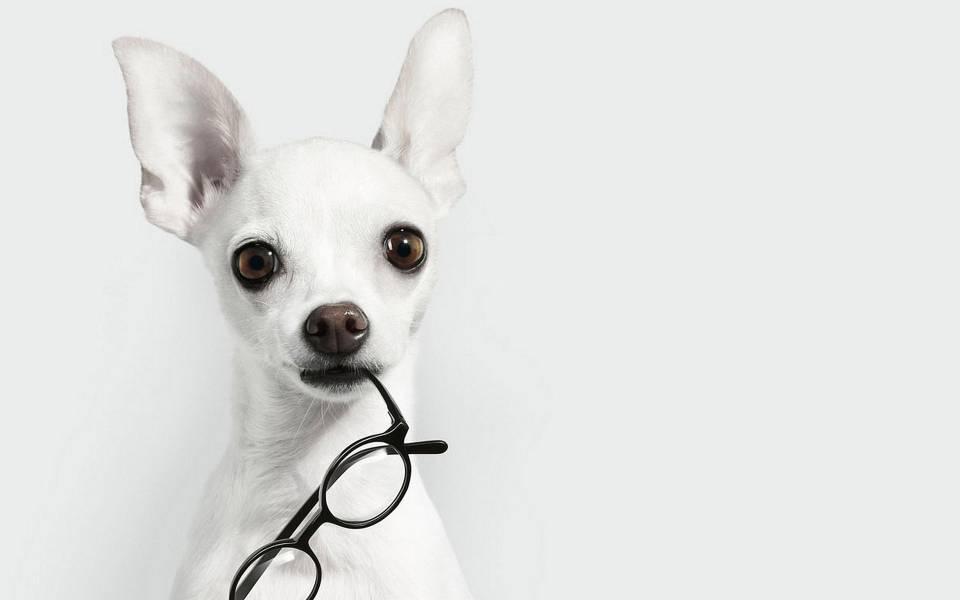 Οι «έξυπνες» συσκευές απειλούν την όρασή μας