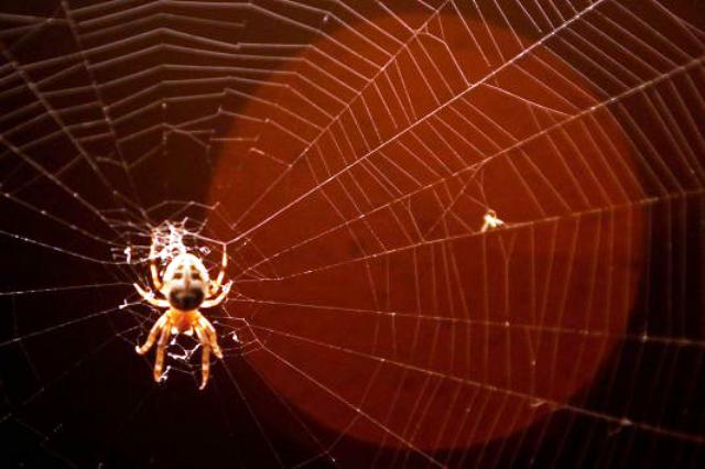 Ανακαλούνται 42.000 οχήματα της Mazda, λόγω κίτρινης αράχνης