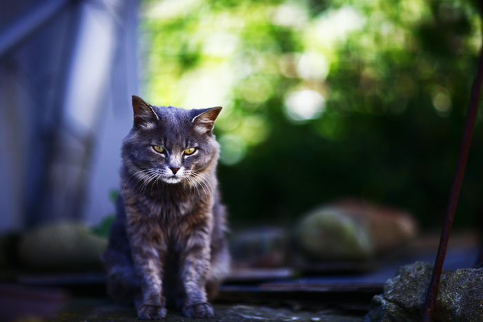 Το «Νησί των γατών»!