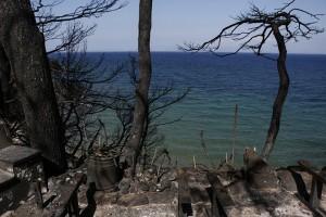 Φωτογραφία που δόθηκε σήμερα στην δημοσιότητα και απεικονίζει καμένα δέντρα και γλάστρες σε κατεστραμμένο σπίτι, κατά τη διάρκεια ρεπορτάζ για τον νέο πολεοδομικό σχεδιασμό, μετά την θανατηφόρα πυρκαγιά, στο Μάτι, κοντά στην Αθήνα, Πέμπτη 2 Αυγούστου 2018. «Ας είναι οι δυο μεγάλες τραγωδίες της Αττικής στη Μάνδρα και στο Μάτι, ο συναγερμός και το έναυσμα για σημαντικές αλλαγές» τονίζει ο πρωθυπουργός, Αλέξης Τσίπρας, με ανάρτησή του στο twitter, προσθέτοντας ότι πρέπει «να ενισχύσουμε κατάλληλα τον μηχανισμό πρόληψης και προστασίας για να μη ξαναζήσουμε ποτέ, παρόμοιες τραγωδίες». Κυριακή 5 Αυγούστου 2018 ΑΠΕ-ΜΠΕ/ΑΠΕ-ΜΠΕ/ΓΙΑΝΝΗΣ ΚΟΛΕΣΙΔΗΣ