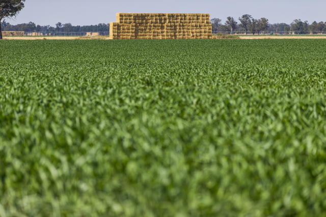 Agricultural field, Howlong, Albury, New South Wales, Australia