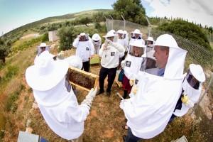 beehives visit