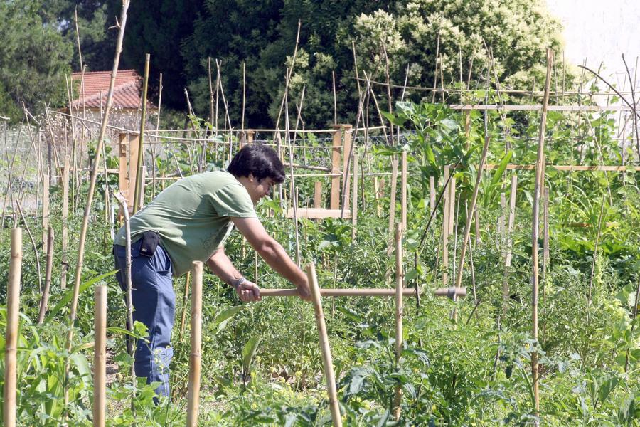 Καλλιεργητές και εξαγωγείς «τρέμουν» πιθανό ρωσικό εμπάργκο