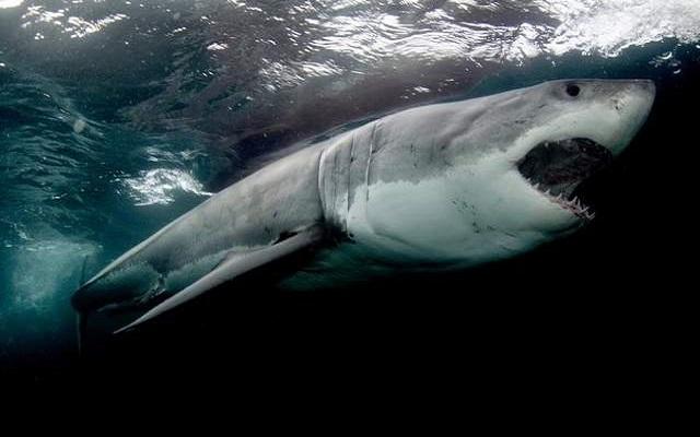 Ο καρχαρίας έφαγε το Internet – Βίντεο