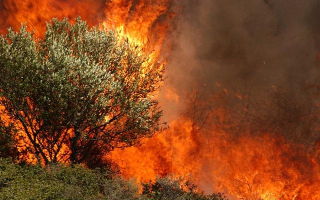 Σε εξέλιξη μεγάλη πυρκαγιά στην Πελοπόννησο