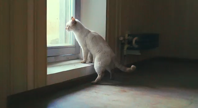 Η τράπεζα που μαζί με στεγαστικό δάνειο δίνει και μια γάτα!