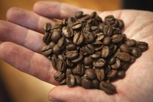 Irving Farm Coffee Roasters buyer Dan Streetman holds a handful of La Bendicion coffee beans in Manhattan