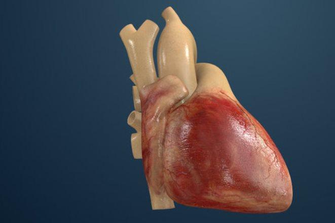 Προσομοιωτής καρδιάς για «αναίμακτους» πειραματισμούς
