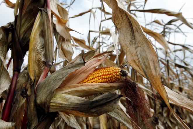 Μήπως ο επόμενος παγκόσμιος πόλεμος θα αφορά τα τρόφιμα;