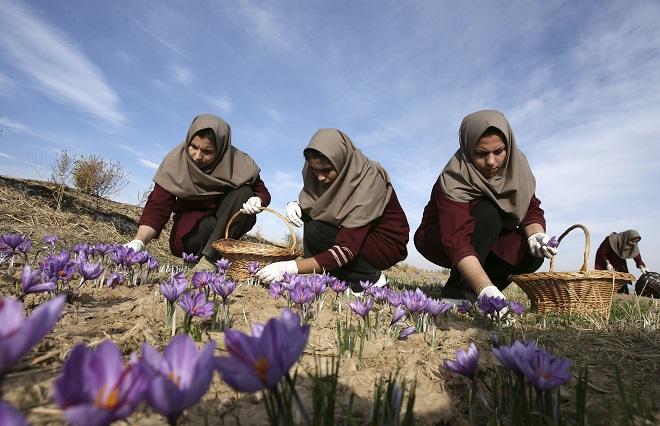 Ο «κόκκινος χρυσός» του Ιράν που σπάει το εμπάργκο