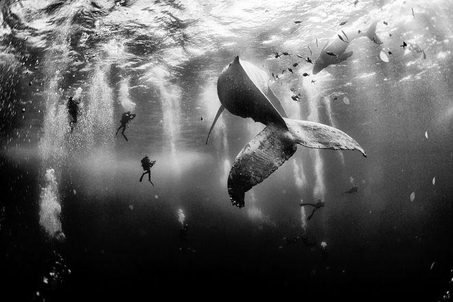 National Geographic: Οι καλύτερες φωτογραφίες του 2015