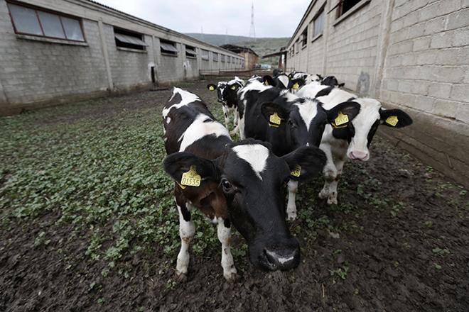 Τράπεζα Πειραιώς και ΔΕΛΤΑ ενισχύουν τη γαλακτοπαραγωγό κτηνοτροφία