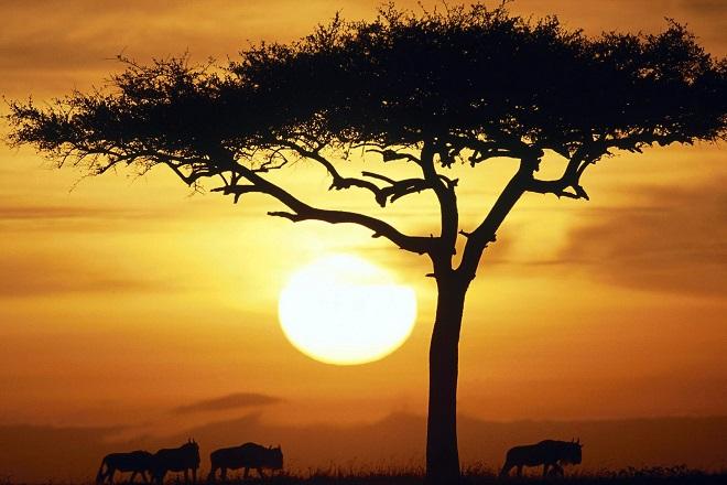 Οι 326 δισεκατομμύρια λόγοι που η Αφρική προχωράει μπροστά