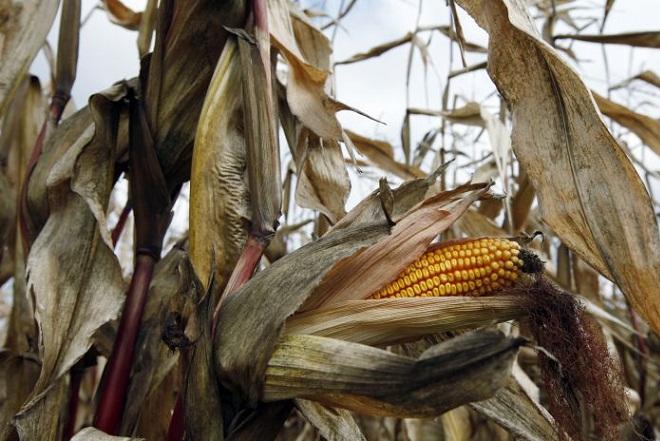 Ο επόμενος παγκόσμιος πόλεμος θα είναι για τα τρόφιμα;