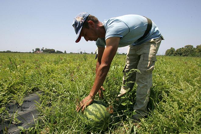 Η «υγεία» της καλλιέργειάς σας περνά μέσα από ένα κινητό!