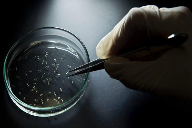 Διεθνής επιστημονική συμμαχία κατά του ιού Ζίκα