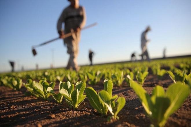 Γιατί οι Αμερικανοί αγρότες σταματούν την καλλιέργεια