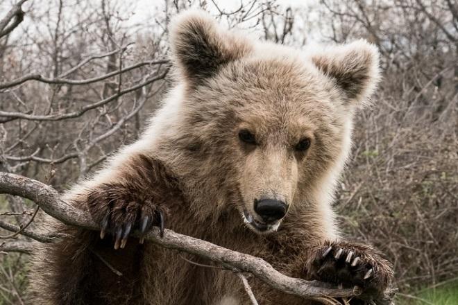 Η iSquare ανακοινώνει ότι o Πάτρικ, το αρκουδάκι ελευθερώθηκε στη φύση