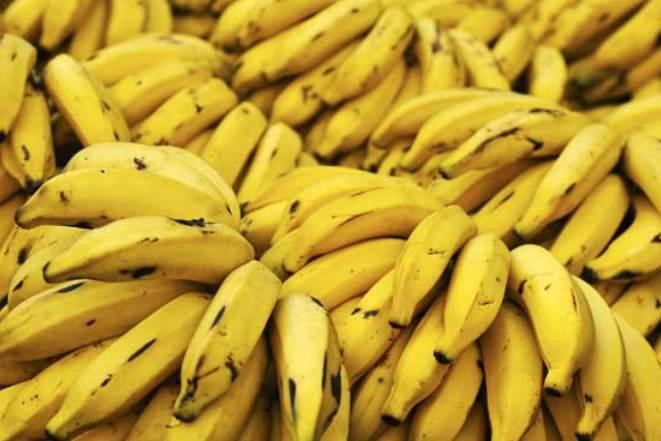 Η αρρώστια που απειλεί την παγκόσμια παραγωγή μπανάνας