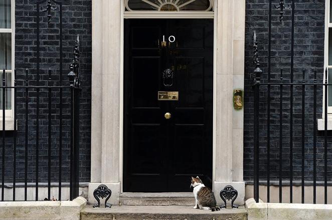 Ο Ντέιβιντ ο πρωθυπουργός φεύγει, ο Λάρι ο γάτος μένει!