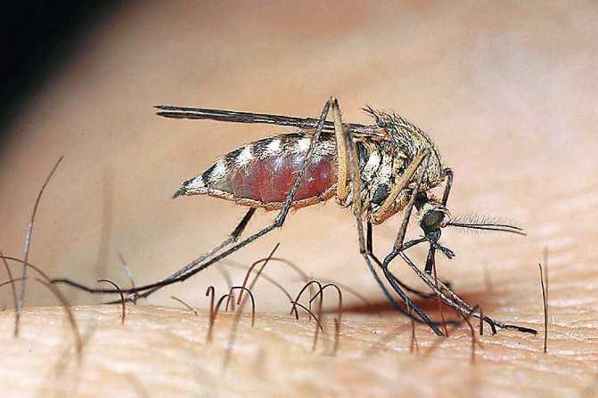 Καθησυχαστικό το ΚΕΕΛΠΝΟ για τα κρούσματα ελονοσίας