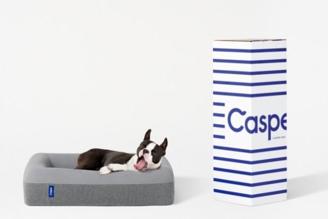 casper-dogbox