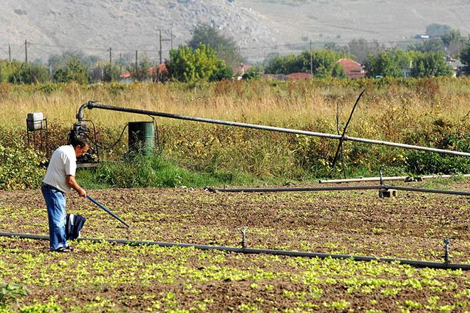 «Κόκκινα» αγροτικά δάνεια: Τι προβλέπει η ρύθμιση του υπουργείου Αγροτικής Ανάπτυξης