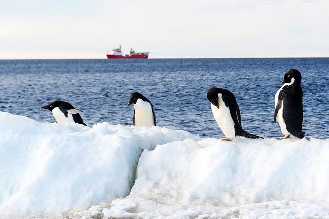 Από τους… πεινασμένους πιγκουίνους στα «έξυπνα» αυτοκίνητα