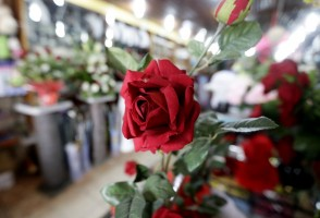 epa05791024 A view of a red rose made of fabric in a flower shop ahead of Valentine's Day in Abidjan, Ivory Coast, 13 February 2017. Valentine's Day, celebrated all over the world on 14 February, is the day dedicated to express love.  EPA/LEGNAN KOULA