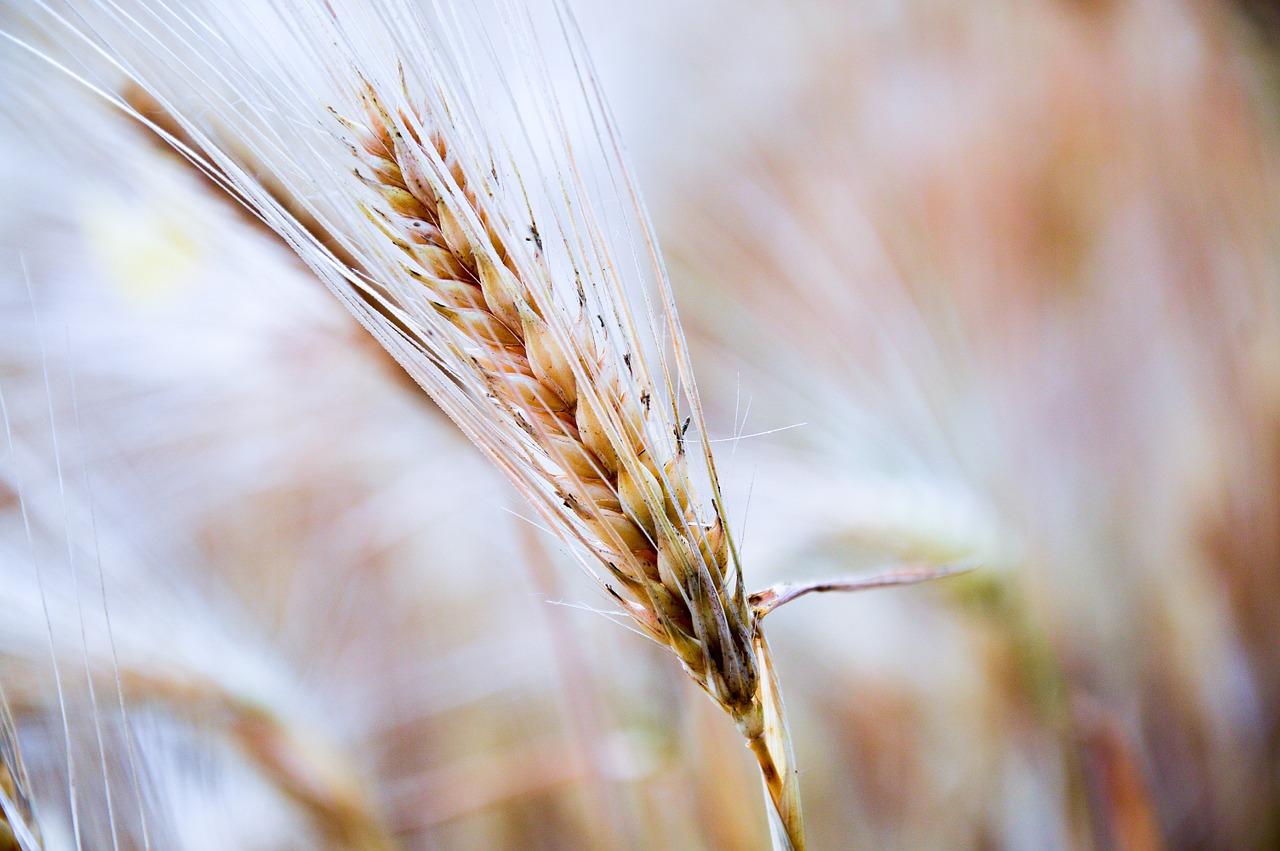 «Σκιαγραφώντας το Μέλλον της Αγροδιατροφής στην Ελλάδα»