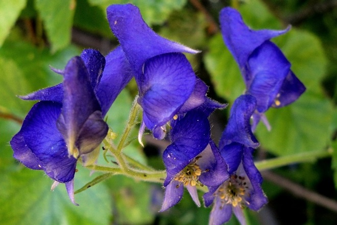 Αυτά είναι τα πιο επικίνδυνα φυτά στον κόσμο