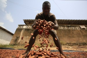 epa06433760 Farmers from Ivory Coast work with cocoa beans at a farm in Tiassale town in southern Ivory Coast, 09 January 2018. Cocoa, the main ingredient in chocolate, is a very profitable crop in West Africa. Ivory Coast leads the world in the production and export of cocoa beans, which provide 33 percent of the world's cocoa. The recent allegations of child labor on cocoa plantations in West Africa tainted the industry by asking questions about the ethics of West African farmers.  EPA/LEGNAN KOULA