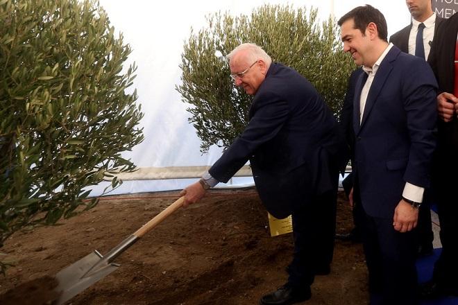 (Ξένη Δημοσίευση) Με τη συμβολική φύτευση δύο δέντρων ελιάς από τον πρωθυπουργό, Αλέξη Τσίπρα (Δ) και τον Πρόεδρο του Ισραήλ, Ρούβεν Ρίβλιν (Α), ολοκληρώθηκε η τελετή θεμελίωσης του Μουσείου Ολοκαυτώματος Θεσσαλονίκης, Τρίτη 30 Ιανουαρίου 2018. Το Μουσείο θα ανεγερθεί σε μια περιοχή με μεγάλο συμβολισμό, κοντά στον παλαιό Σιδηροδρομικό Σταθμό, από όπου στη Γερμανική Κατοχή αναχωρούσαν τα «βαγόνια του θανάτου», τα οποία μετέφεραν Εβραίους στα ναζιστικά στρατόπεδα συγκέντρωσης.  ΑΠΕ-ΜΠΕ/ΓΡΑΦΕΙΟ ΤΥΠΟΥ ΠΡΩΘΥΠΟΥΡΓΟΥ/Στέλιος Μισίνας