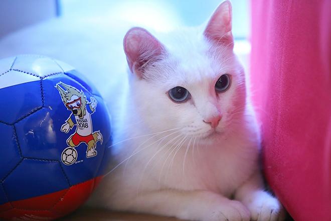Αχιλλέας: Ο… ασυνήθιστος γάτος που θα προβλέπει τα αποτελέσματα του Μουντιάλ