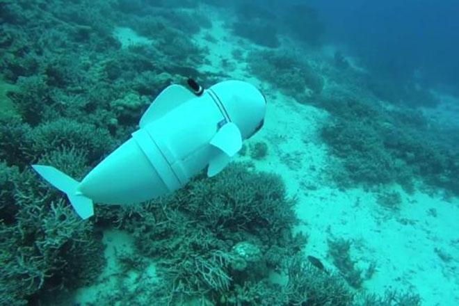 Το ψάρι-ρομπότ του ΜΙΤ θα αποκαλύψει τα καλά κρυμμένα μυστικά του βυθού