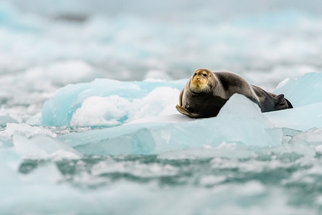 Το λιώσιμο των πάγων στην Αρκτική προσθέτει 14.000 τόνους νερού ανά δευτερόλεπτο στη στάθμη της θάλασσας