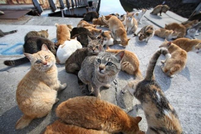 Αυτή είναι η «Πόλη των Γατών»