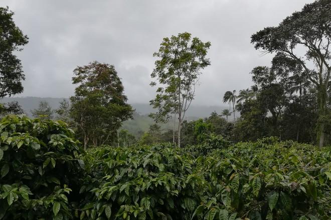 Samba Café: Ταξιδεύει στη Λατινική Αμερική και ανακαλύπτει τα μυστικά του πιο διάσημου ροφήματος