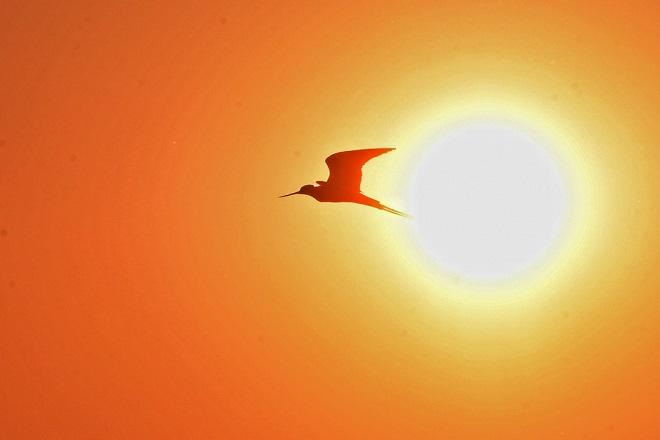 Νέο κύμα καύσωνα από αύριο – Έκτακτο δελτίο εξέδωσε η ΕΜΥ