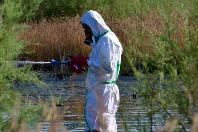 Συνεργείο της Περιφέρεις Πελοποννήσου ψεκάζει για τα κουνούπια σε τοποθεσία  στην πόλη του Ναυπλίου , Τρίτη 3 Ιουλίου 2018.Σχετικά με τον ιό του Δυτικού Νείλου, η Περιφέρεια Πελοποννήσου συνεχίζει να υλοποιεί εκτεταμένο πρότυπο πανελλαδικά «Πρόγραμμα Καταπολέμησης Κουνουπιών με πεδίο εφαρμογής επιλεγμένες περιοχές του φυσικού, περιαστικού και αγροτικού συστήματος των Περιφερειακών Ενοτήτων Αργολίδας, Αρκαδίας, Κορινθίας, Λακωνίας, Μεσσηνίας για την τριετία 2018-2019-2020» Παράλληλα, πραγματοποιούνται δράσεις ενημέρωσης των κατοίκων στις οικίες τους, σε συνεργασία με τους τοπικούς προέδρους, για την πληροφόρηση του κοινού και τα μετρά προστασίας που πρέπει να λαμβάνουν.  ΑΠΕ-ΜΠΕ /ΑΠΕ-ΜΠΕ/ΜΠΟΥΓΙΩΤΗΣ ΕΥΑΓΓΕΛΟΣ