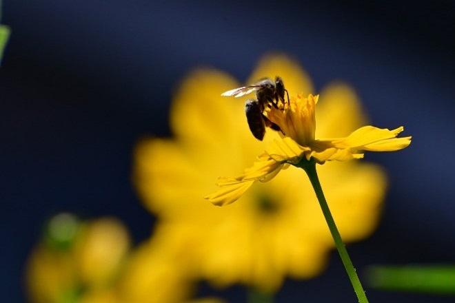 Μπορεί μια μέλισσα να σταματήσει την παγκόσμια εξάρτηση από τα πλαστικά;